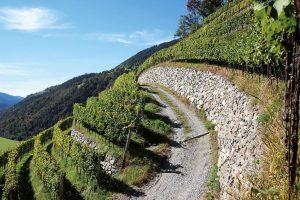 Weinbau in Steillagen