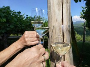 Weinmuseum: Wie schmecken Weine alter Rebsorten?